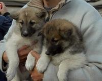 Tierhilfe e.V. Strasburg warnt vor skrupellosen Welpenhändlern