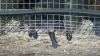 Deutsche Pelzfarmen: Tausende Tiere sterben durch Sommerhitze