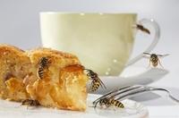 Wespen: Lästige Begleiterscheinung des Sommers