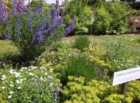 Gärten entdecken und landidyllisch genießen im Sächsischen Elbland