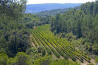 Spanische Bioweine aus gesunder Natur werden immer besser!