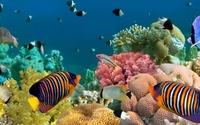 Tag der Fische 2012: markt.de mit Top Aquaristik Shops
