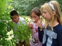 Der Schulgarten als natürliche Begegnungsstätte von Tieren, Pflanzen und Menschen