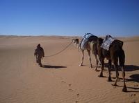 Wandertrekking in der tunesischen Sahara vom 07. - 14.01.2013