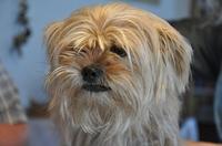 Haustierversicherung - ist das wirklich nötig?