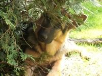 Bund Deutscher Tierfreunde e.V. gibt Tipps zum Hundekauf