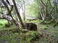 Irland im Herbst & Winter -   Feenzauber auf der grünen Insel