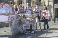 Deutscher Tierhilfe Verband e.V. fordert Bundesrat auf, die Käfighaltung von Kaninchen zu verbieten