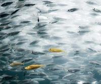 Neue synthetische Hydraulikflüssigkeiten für maritime Anwendungen