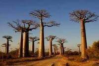 Aktiv erleben: Baobabs, Bribri und Bagan