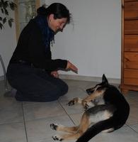 Hunde: Beschäftigungsspaß statt Auslastung