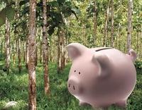 Nachhaltig sparen mit höheren Renditen: Waldspartag statt Weltspartag!