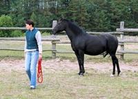 Pferdeflüstern - Tagesseminar auf der Bio Ranch