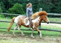Freies Reiten - Vertrauensvolle Kommunikation mit Pferden