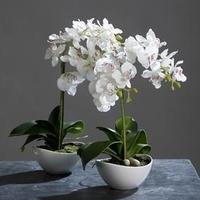 Orchideen-Pflege - gewusst wie