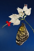 Was passiert mit den Schmetterlingen eigentlich im Winter?