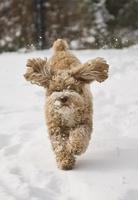Unbeschwerte Winterzeit für Hunde und Katzen mit EM