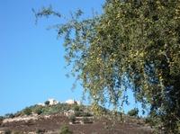 Besorgnis in Marokko wegen gestrecktem Arganöl