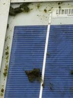 Schwarze Gefahr auf Solarmodulen