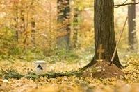 Waldbestattung: Grab unter Bäumen