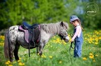 Top 10 der Pferderassen 2012