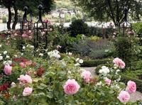 Die schönsten Rankgerüste für Rosen