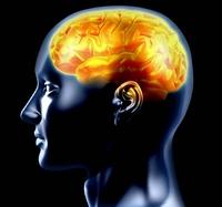 Gehirn-Wissen für Sitzberufler & Kopfarbeiter