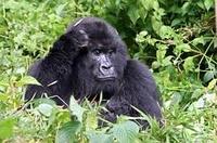Uganda fasziniert durch seine einzigartige Tierwelt