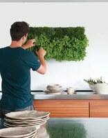 Jetzt gehen die Pflanzen bei Greenbop.de die Wände hoch!