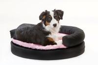 Stylische Hundebetten für kleine Hunde