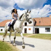 Die richtigen Reiterferien finden mit pferde.de