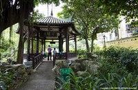 Macau: 800 alte Baumriesen in der dicht besiedelsten Stadt der Welt