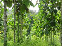 Teakholz-Investments: Klimaschutz mit guter Rendite