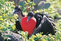 Ecuador die Galapagos Inseln auf Rundreisen hautnah erleben