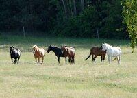 Vertrauensvolle Kommunikation - Pferdeflüstern in Zempow
