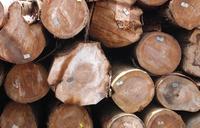 Holzinvestments: Hohe Rendite dank FSC-Siegel