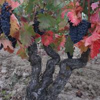 Carlosvinos: Acústic Celler eine der besten Weinkellereien