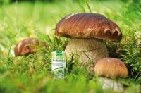 Foto-Wettbewerb: Herbamare Mini-Frischkräutersalz für Outdoor-Genuss