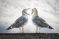 NATÜRLICH!? - Schöner als wahr -    Naturbilder zwischen Fotografie und Montage