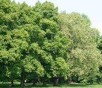 HKI: Holz als Brennstoff - Energie aus Biomasse trägt maßgeblich zur CO2-Reduzierung bei