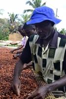 Rainforest-Alliance-Certified Kakao ist Marktführer