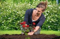 Hochwertige Erde für anspruchsvolle Rosen