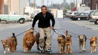 Effektives Hundetraining mit LandRoller Skates
