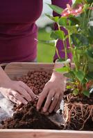 Natürlicher Helfer für Zimmer- und Balkonpflanzen