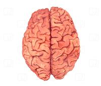 Ein Gehirn hat jeder - aber die wenigsten wissen es zu nutzen