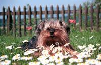 """Bund Deutscher Tierfreunde empfiehlt """"Testhund"""" in der Ferienzeit"""