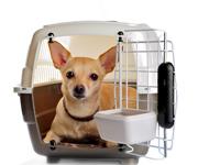 Flugreisen mit dem Hund: Worauf Hundehalter achten sollten