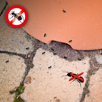 Ameisenbefall in Haus und Garten mit Gardigo bekämpfen.