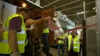 Programmhinweis RTL Reportage: Als die Tiere fliegen lernten - Hochsaison am Airport