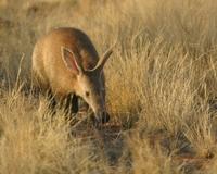 Tswalu Foundation: Unterstützung der Bevölkerung und Schutz der Tierwelt der südlichen Kalahari